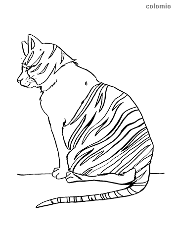 American shorthair coloring page