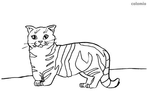 Munchkin cat coloring page