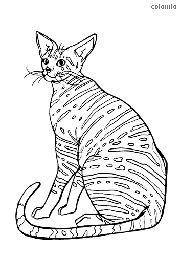 Oriental Shorthair coloring page