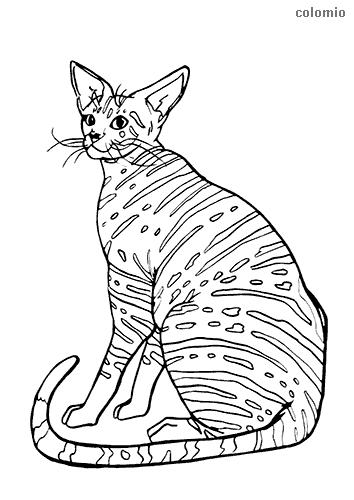 Dibujo de Gato oriental de pelo corto para colorear