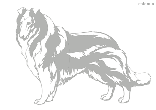 Collie coloring sheet