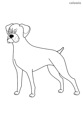 Funny boxer coloring page