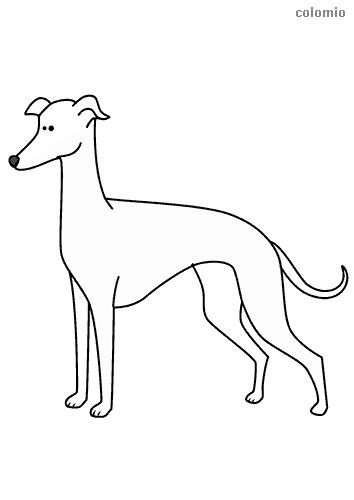 Dibujo de Galgo para colorear