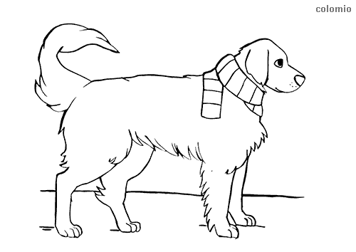 Dibujo de Golden retriever para colorear