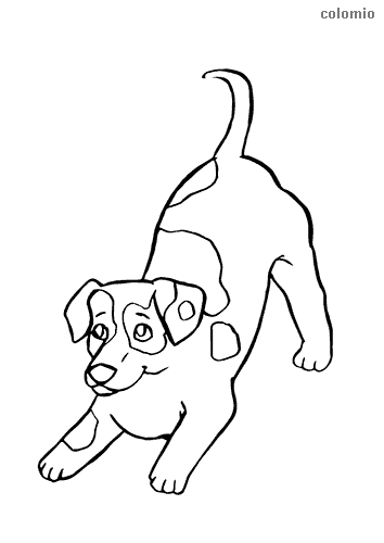 Jack Russel puppy coloring page