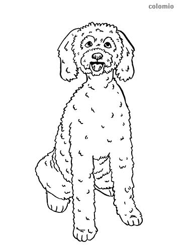 Dibujo de Labradoodle para colorear