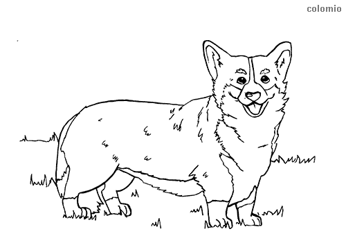 Dibujo de Corgi galés para colorear