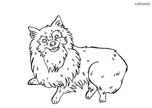 Pomeranian coloring page