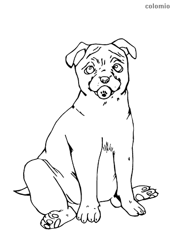 Pug puppy coloring page