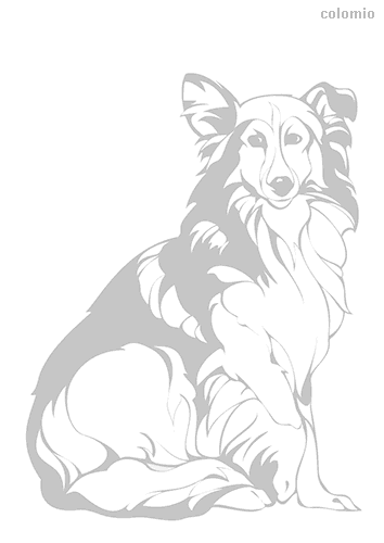 Rough Collie coloring page