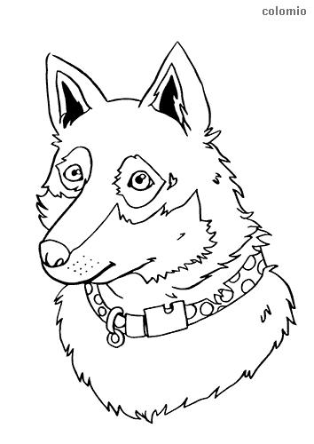 Dibujo de Cabeza de perro pastor para colorear