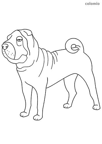Dibujo de Shar Pei para colorear