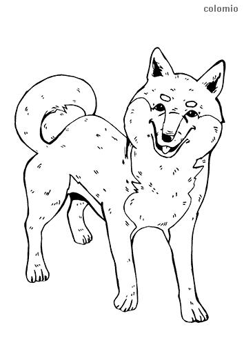 Dibujo de Shiba Inu para colorear
