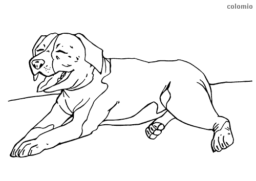 Staffordshire Bull Terrier coloring page