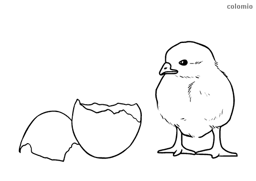 Chick with eggshell coloring page