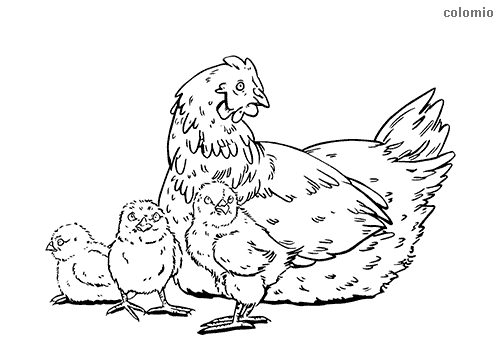 Hen with three chicks coloring page
