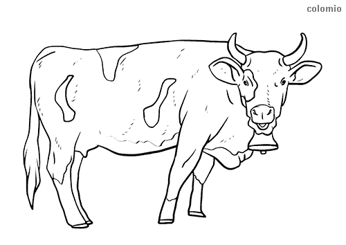 Cow with bell and horns coloring page