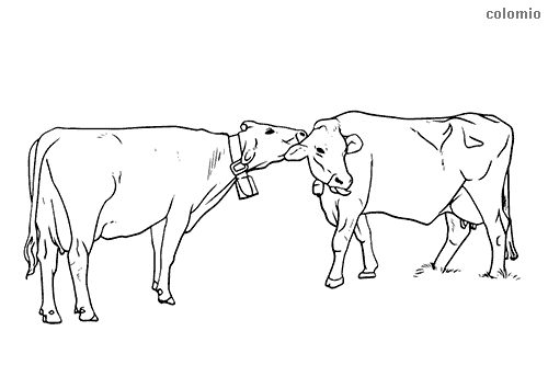 Cows with bells coloring sheet
