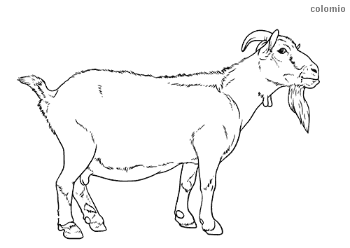 Billy-goat coloring sheet