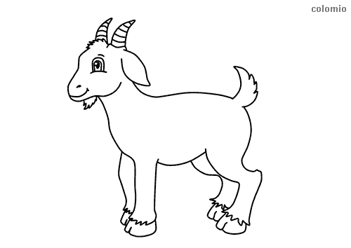 Cute billy-goat coloring page