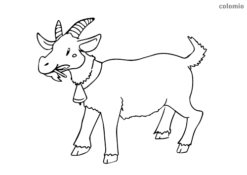 Goat with bell coloring page