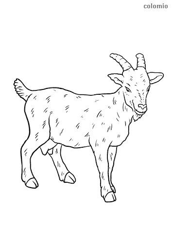 Goat with horns coloring page