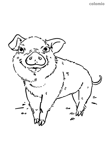 Funny piglet coloring sheet