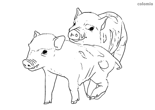 Pair of piglets coloring page