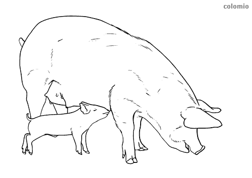 Sow with Piglet coloring sheet