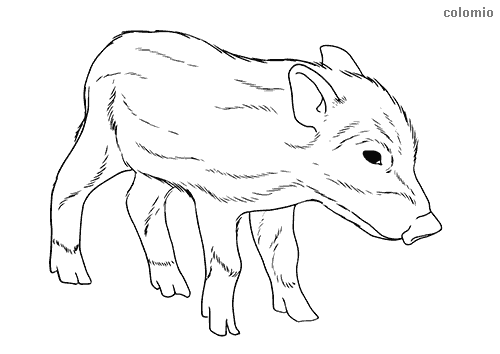 Wild boar piglet coloring page