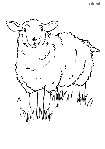 Sheep in a meadow coloring page