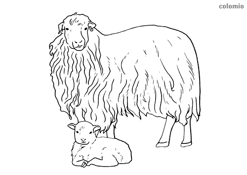 Sheep with lamb coloring page
