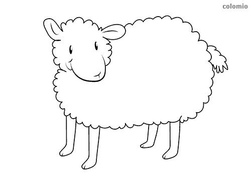 Simple lamb coloring sheet