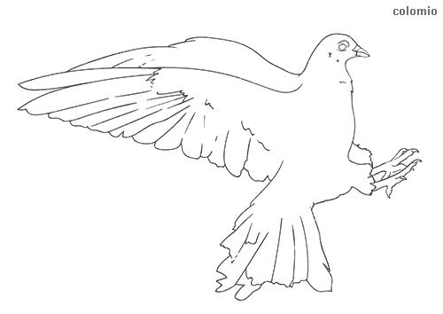 Dibujo de Paloma para colorear