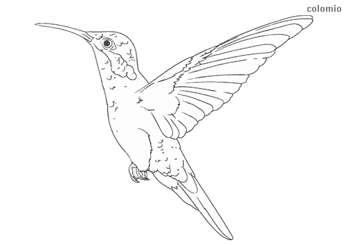 Hummingbird in flight coloring page