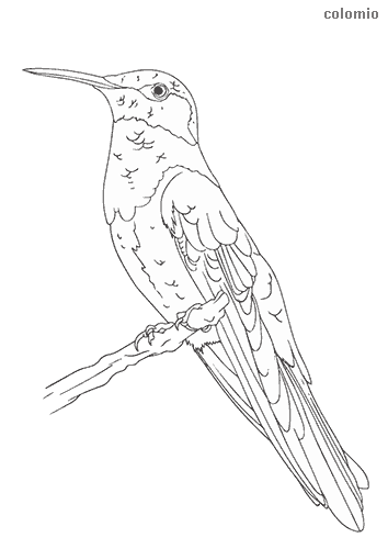 Hummingbird on tree trunk coloring sheet