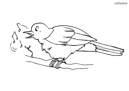 Singing Sparrow coloring sheet