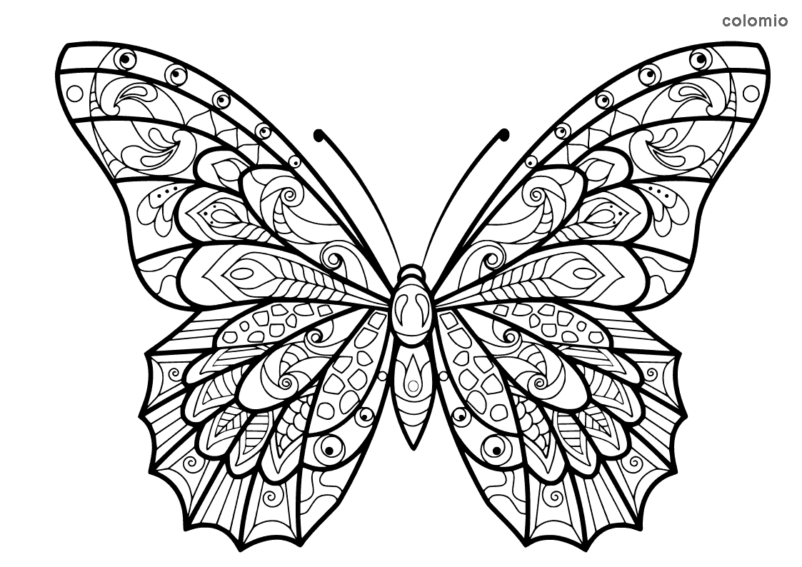 Complex butterfly coloring sheet