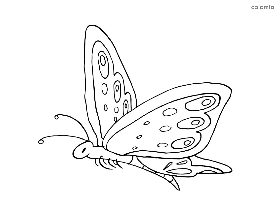 Flying butterfly coloring sheet