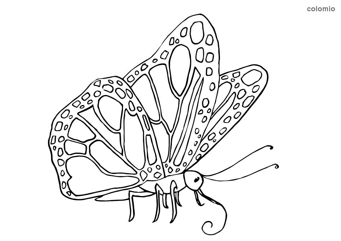 Sitting butterfly coloring pape