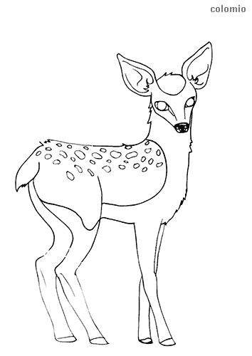 Dibujo de Cervatillo para colorear