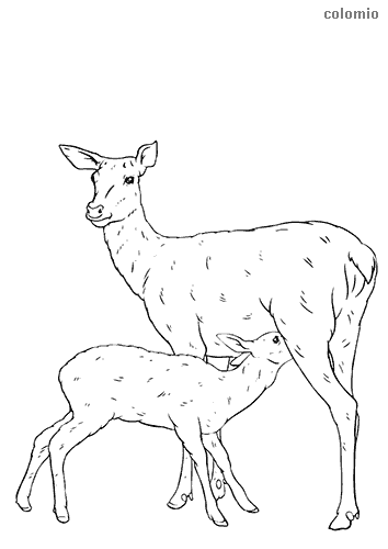Deer mother with fawn coloring sheet