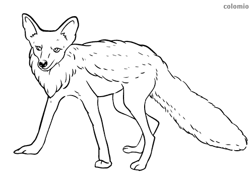 Realistic fox coloring sheet