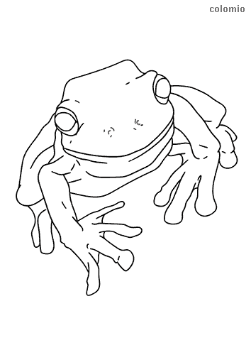 Realistic frog coloring sheet
