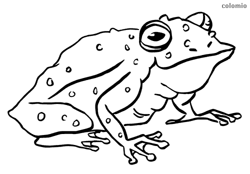 True toad coloring page