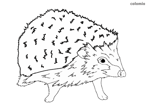Hedgehog baby coloring page