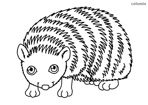 Simple hedgehog coloring sheet