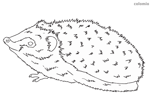 Sniffing hedgehog coloring sheet