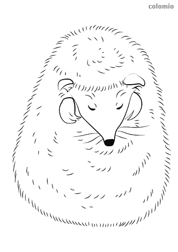 Sweet sleeping hedgehog coloring page