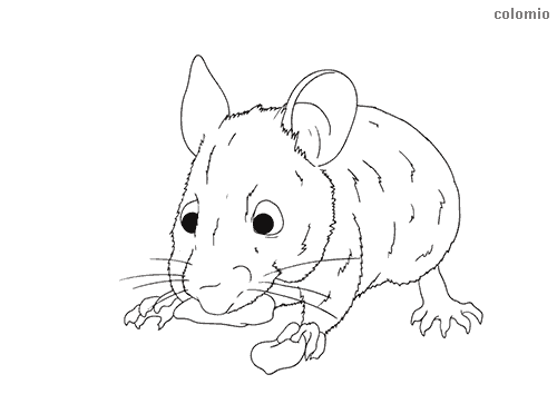 Crawling mouse coloring page